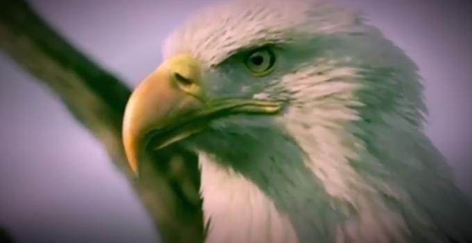 Aquila rosanero
